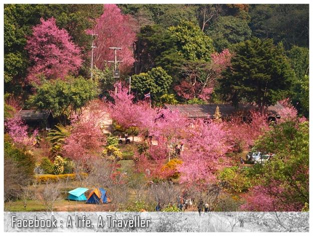 Sakura 024