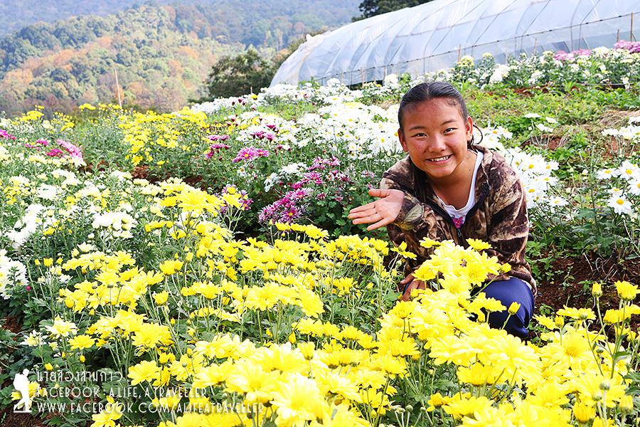 Chiang Rai 065